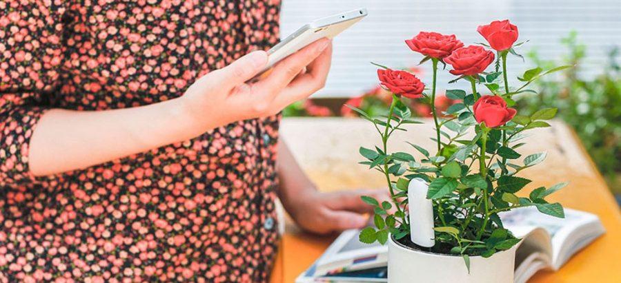 Уход за растениями с Xiaomi
